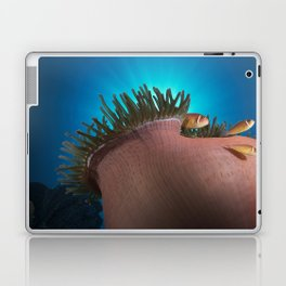 Pink Clownfishes in Anemone Laptop & iPad Skin