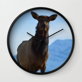 Elk in the Canadian Rocky Mountains Wall Clock