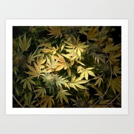 Yellow Cannabis Family Art Print