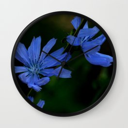 Eyes as blue as chicory blooms Wall Clock