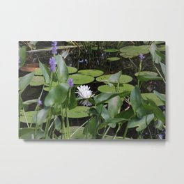 Lilly Pads in the Sun Metal Print