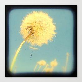 Dandelions #4 Canvas Print