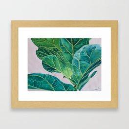 Ficus lyrata Framed Art Print