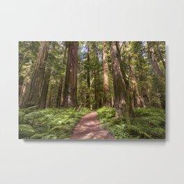 California Redwoods 7-29-17  Metal Print