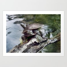 long neck Tutle Art Print