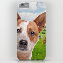 Australian Cattle Dog Red iPhone Case