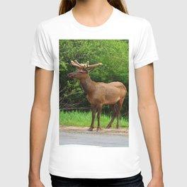 Wapiti At The Roadsite T-shirt