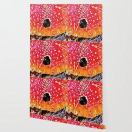 Fly amanita mushroom Wallpaper