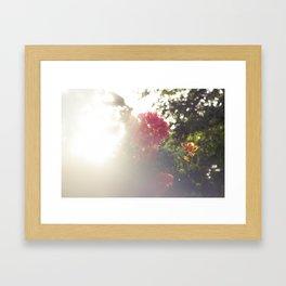 Tropic Blurs Framed Art Print