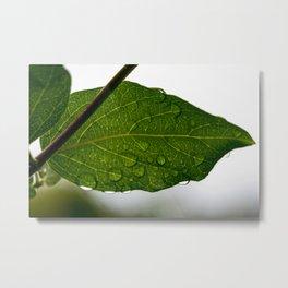 Wet leaf Metal Print