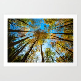 Kaleidoscope - Fall Colors in Trees of Great Smoky Mountains Art Print