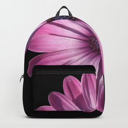 Spectacular African Daisy Isolated On Black Backpack