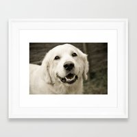 golden retriever Framed Art Prints featuring golden retriever by EdiGraf
