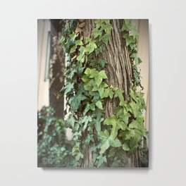 Climbing Ivy Metal Print