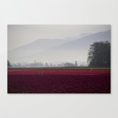 Tulip Fields in the Morning Light Canvas Print