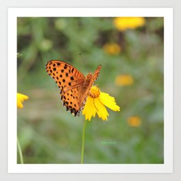 Ms. Indian Fritillary at West Lake Art Print