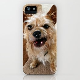 Grumpy Dog iPhone Case
