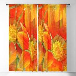 Seamless Pattern Of Vibrant Orange Gazania Flower Blackout Curtain