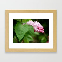 Pink Lilac Framed Art Print