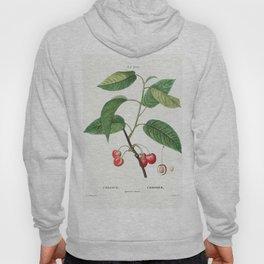 Cherry (Cerasus) from Traite des Arbres et Arbustes que lon cultive en France en pleine terre (1801- Hoody
