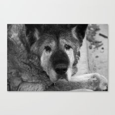 Old Lady Akita Canvas Print