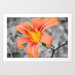 flower in grey Art Print