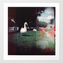 Swans and Poppies Art Print