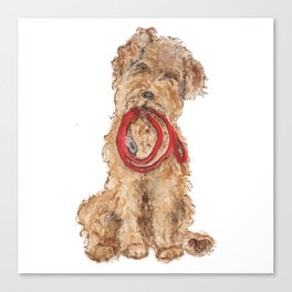 Wired Hair Terrier Ready for Walkies  Canvas Print