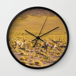 Vicuñas in the Desert, San Pedro de Atacama, Chile Wall Clock