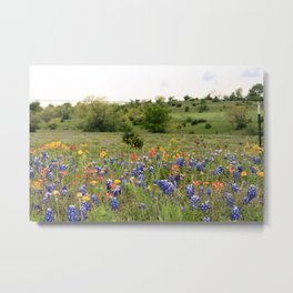 Bluebonnets, Indian Paintbrushes & Wildflowers Metal Print