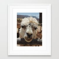 lama Framed Art Prints featuring Lama  by Ricarda Balistreri