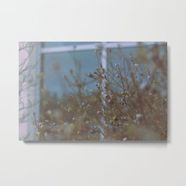 Withered Winter Plants Metal Print