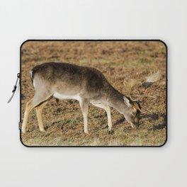 Fallow deer buck Laptop Sleeve