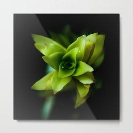 Aptenia succulent plant Metal Print