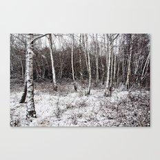 Winter birches Canvas Print