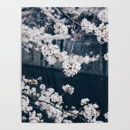 Sakura ii Poster