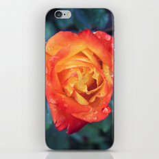 Multicolor Rose iPhone & iPod Skin