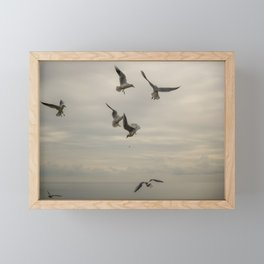 Seagulls flying in a cloudy day of winter Framed Mini Art Print