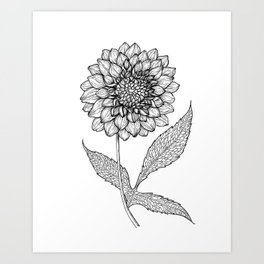 Dahlia drawing Art Print