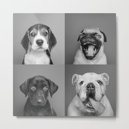 Puppies Collection Metal Print
