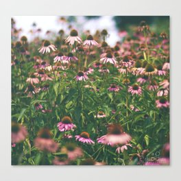 Love of Pink Canvas Print