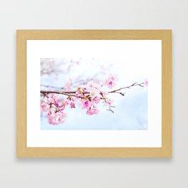 Japanese cherry-blossom tree, 'Oh-kanzakura' Framed Art Print
