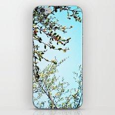The Trees iPhone & iPod Skin