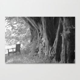 Avenue of Trees Canvas Print