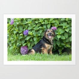 Black dog sitting in the garden Art Print
