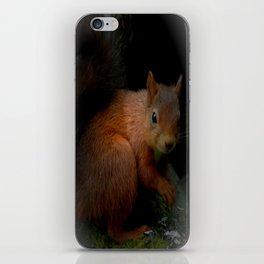 Red Squirrel iPhone Skin