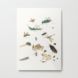 Insects, frogs and a snail Metal Print