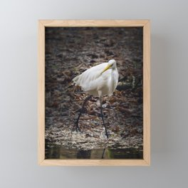 Egret Strutting Framed Mini Art Print