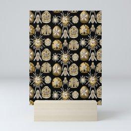 Ernst Haeckel - Scientific Illustration - Echinidea (Sea Urchins) Mini Art Print