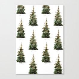 Norway Spruce Christmas Tree Botanical Illustration Canvas Print